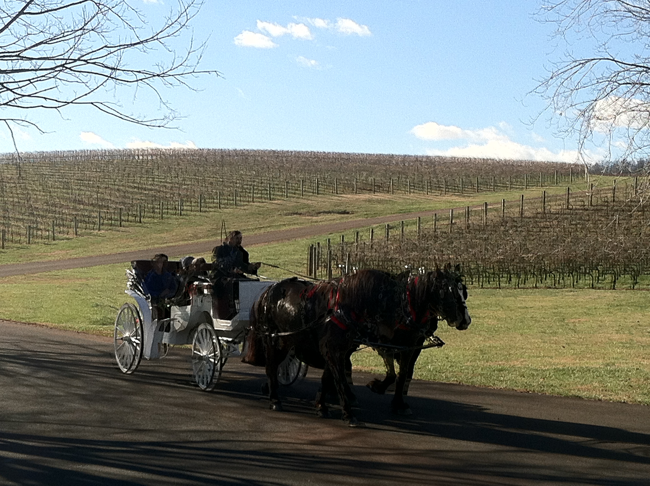 Trump Winery Offering Carriage Rides